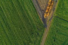 Trutnia widok z lotu ptaka nad kukurydzanym polem i lot obrazy stock
