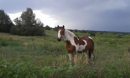 Trwanie koń Zdjęcia Royalty Free