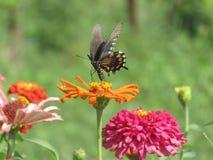 Trwanie motyl zdjęcie stock