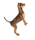 Trwanie psi boczny widok obrazy stock
