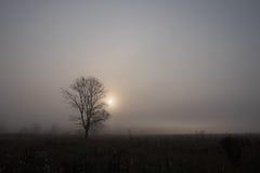 Trwanie samotny drzewo Obraz Royalty Free