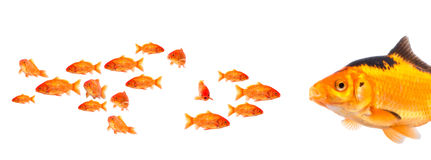 Try to be strong. Little fish try to be a bigger one Stock Images