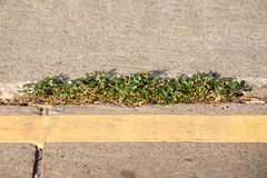 Plants on the road Royalty Free Stock Photo
