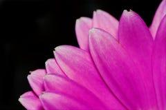 tryb kwiatek makro Fotografia Royalty Free