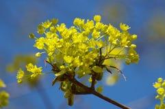 trybowa wiosna Zdjęcie Stock