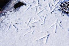 tryck av fågeln på snö Arkivfoto