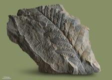 Tryck av forntida växter Arkivfoto