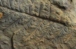 Tryck av forntida växter Royaltyfri Foto