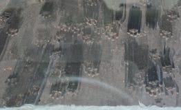 Tryck för kattfot på bilvindrutan Arkivbild
