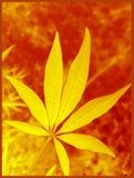 Tryck för konst för bakgrund och för tapet för makro för blad för blomma för Vitex agnuscastus royaltyfri bild