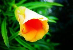 Tryck för konst för tapet för Hibiskus blommabakgrund arkivfoto
