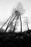 Trycka på för träd Arkivbild