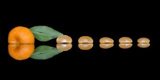 Trycka på sammansättning av mandarinskivor och att skala med ett ljust - grönt blad royaltyfri bild