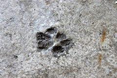 Trycket för kattfoten torkade i cement på garagegolv Royaltyfri Bild