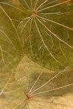 tryckte på torra leaves för bakgrund Royaltyfri Bild
