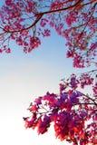 Tryckvåg av rosa färger Royaltyfri Fotografi
