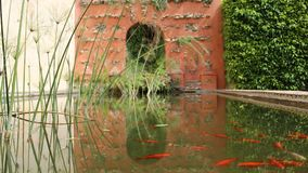 Tryptic fish pond stock photo
