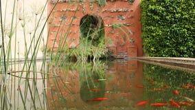 Tryptic rybi staw zdjęcie stock
