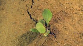 Trzęsienie ziemi rozdziera zmielony w oddaleniu, chwianie ziemia z pęknięciem w ziemi z dorośnięcie rośliną, katastrofy pojęcie zdjęcie stock