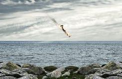 trzaska samolot Zdjęcie Royalty Free
