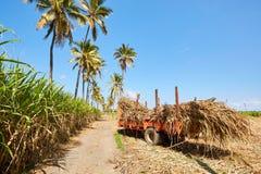 Trzcin cukrowa pola przy spotkanie wyspą fotografia stock