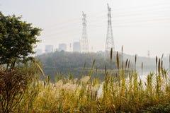 Trzciniasty nadbrzeżny przed elektryczność pilonami na wzgórzu w pogodnym winte obraz stock