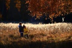 Trzcinowa kwiatu i brzozy drewna złota jesień zdjęcie stock