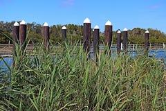 Trzcinowej trawy przedpole z molo pilonami i ostrygi arendowym tłem zdjęcia stock