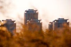 Trzcinowi spikelets przeciw miasto budynkom przy zmierzchem Obrazy Royalty Free