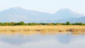 Trzcinowy łóżko jeziorem w naturze zbiory