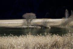 Trzcinowy jezioro - Jiuzhai Sichuan Chiny Obraz Stock