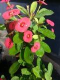 Trzcinowy kwiat zdjęcie stock