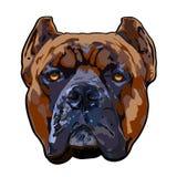 Trzciny Corso psia głowa ilustracja wektor