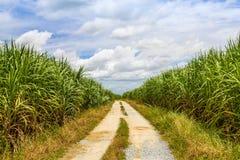 Trzciny cukrowa droga z biel chmurą i pole Zdjęcie Stock