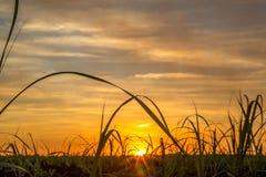 Trzciny cukrowa plantaci droga Obraz Stock