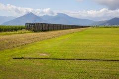 Trzciny cukrowa pole z trzcina pociągiem Zdjęcie Royalty Free