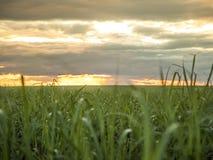 Trzciny cukrowej plantacji zmierzchu widok zdjęcia stock