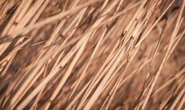 Trzciny jesieni suchy tło Fotografia Stock