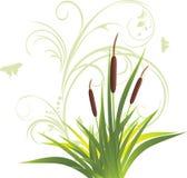 trzciny kwiecisty trawy ornament Zdjęcie Royalty Free