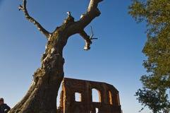 Trzesacz Ruins church Stock Image