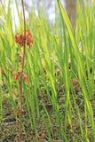 Trzony trawa, Backlit słońcem Fotografia Stock