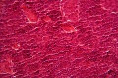 Trzustek komórki pod mikroskopem Zdjęcia Stock