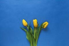 Trzy świeżego żółtego tulipanu Zdjęcie Royalty Free