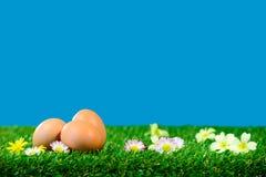 Trzy świeżego jajka na trawie z kwiatami Fotografia Stock