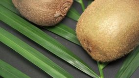 Trzy Świeżej Surowej Egzotycznej Tropikalnej kiwi owoc także dzwonili Chińczyka Gooseberrys Wiruje na drzewko palmowe liściu zdjęcie wideo