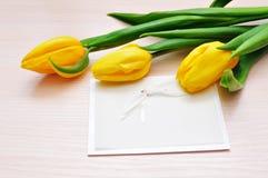 Trzy żółtego tulipanu z miejscem dla twój teksta Zdjęcie Royalty Free