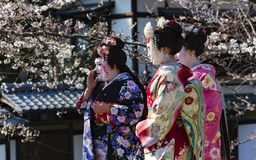 Trzy ładna kobieta w Maiko kimona sukni Fotografia Royalty Free