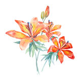 Trzy akwarela kwiatu Fotografia Royalty Free