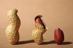 Trzy arachidu w skorupie Zdjęcie Royalty Free
