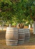 trzy beczki wina Zdjęcie Stock